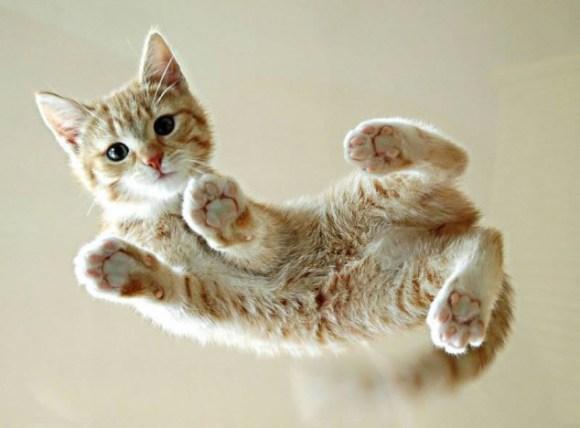 ●猫の腹.jpg