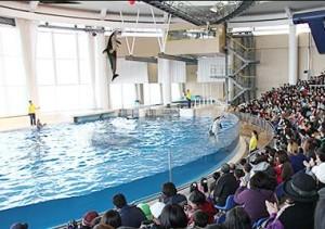 水族館01-300x211.jpg