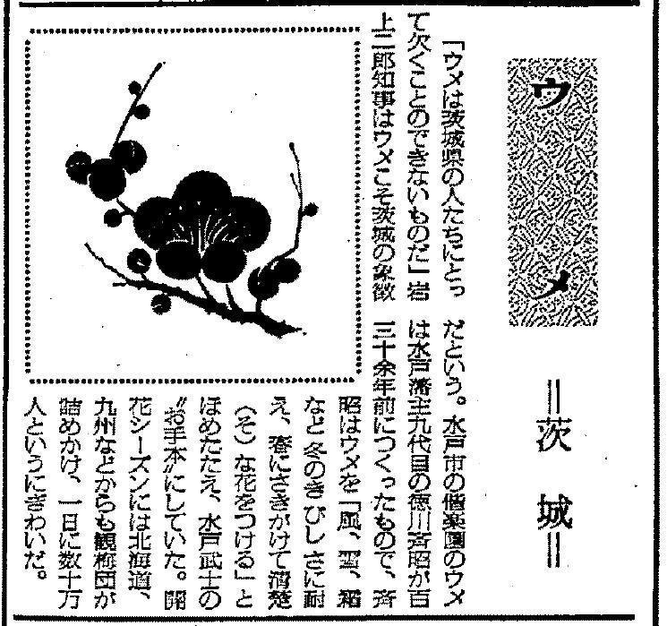県の木紙面2.jpg