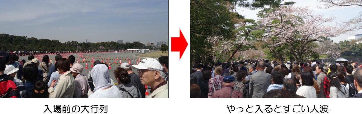 20160331通り抜け①.jpg