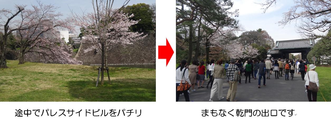 20160331通り抜け②.jpg