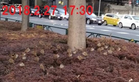 ・・20180227夕_173037.jpg