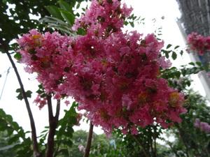 濃ピンク.JPGのサムネイル画像